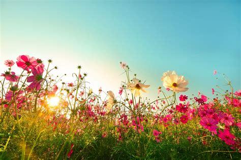 Garten Pflanzen Pralle Sonne pflanzen f 252 r die pralle sonne die top 10 f 252 r garten