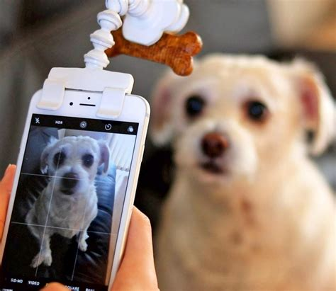 flexy paw treat holder attaches   phone  perfect