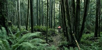 Forest Fascination Cinemagraph Creative Trail Animation Perpetual