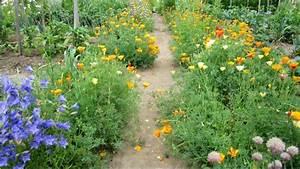 Garten Mohn Sorten : einj hriger mohn im biogarten f llhorn ~ Michelbontemps.com Haus und Dekorationen