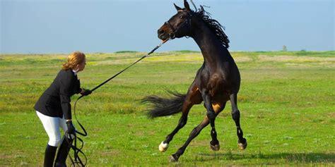 horses horse learning stress nervous calm fearful longe impairs abilities study negative worst line ways reinforcement