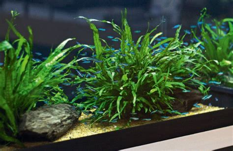 Aquascape Substrate by The Low Tech Planted Aquarium Practical Fishkeeping Magazine