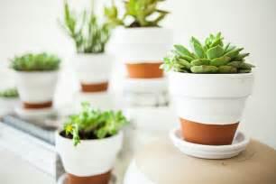 White Succulent Plants in Pot