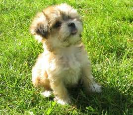 small fluffy dog breeds dog training home dog types