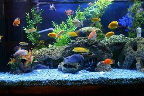 fisch aquarium selber einrichten und dekorieren