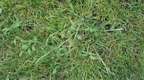 Wie Kann Ich Pilze Im Garten Entfernen by Wie Bekomme Ich Pilze Im Rasen Weg Wie Bekomme Ich Diese