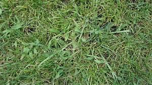 Unkraut Auf Gehwegen Dauerhaft Entfernen : unkraut im gras unkraut im rasen rasen neuanlage unkraut ~ Michelbontemps.com Haus und Dekorationen