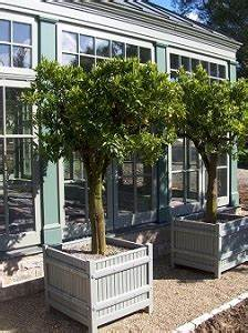 Bäume Für Drinnen : innenraumbegr nung raumbepflanzung gro en baum drinnen ~ Michelbontemps.com Haus und Dekorationen