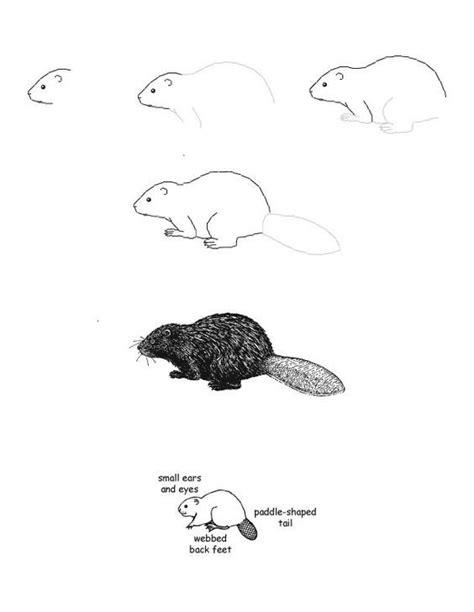 draw  beaver alaska trip   drawings