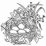 Nest Coloring Bird Pages Birds Drawing Nests Colouring Printable Sketch Adult Tocolor Drawings Place Draw Birdnest Visit sketch template