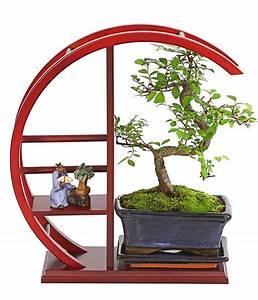 Bonsai Chinesische Ulme : bonsai chinesische ulme im rund regal dehner ~ Sanjose-hotels-ca.com Haus und Dekorationen