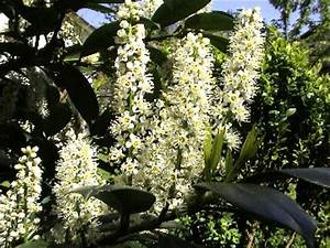 Pflanze Mit Großen Blättern : garten abc ~ Michelbontemps.com Haus und Dekorationen