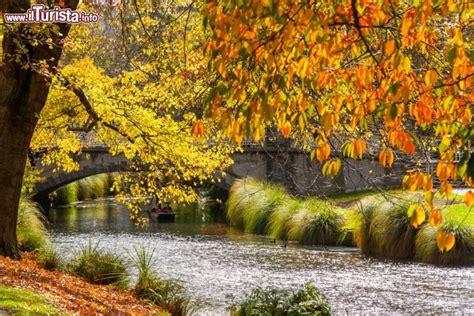 il foliage autunnale degli alberi  tonalita foto