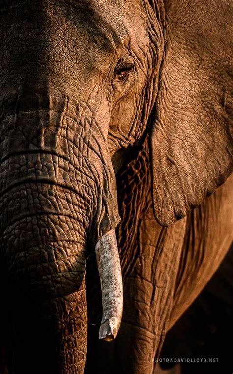 pictures david lloyd wildlife photography