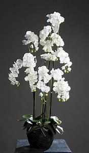 Orchidee Blüht Nicht Mehr : orchidee phalaenopsis in erdballen kunstblume kunstpflanze ~ Lizthompson.info Haus und Dekorationen