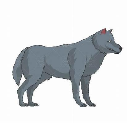 Wolf Brown Grey Pack Market