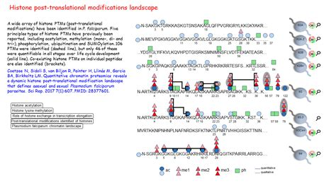 Modification Histone by Histone Post Translational Modifications Landscape