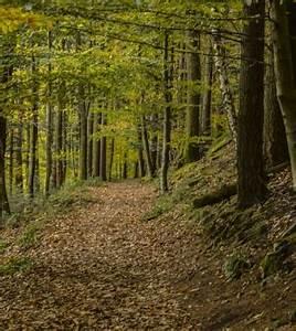 Avenir Et Bois : avis maison et jardin actuels annonce le bois comme mat riau d avenir le journal economique ~ Voncanada.com Idées de Décoration