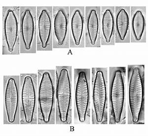 Similar Diatom Species Found In Ecologically Different