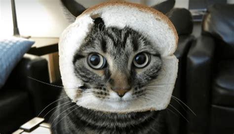 Can Cats Eat Bread Petschoolclassroom