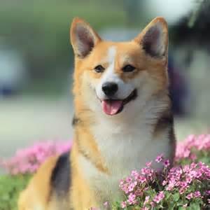 Cute Female Dog Names Unique