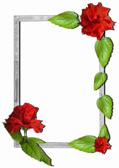 Frame Frames Flowers Flower Transparent Cake Bunga