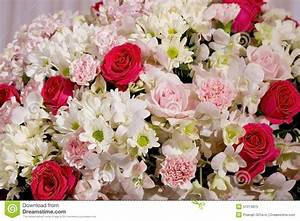 Colorful Fower Background - Natural Texture Of Love