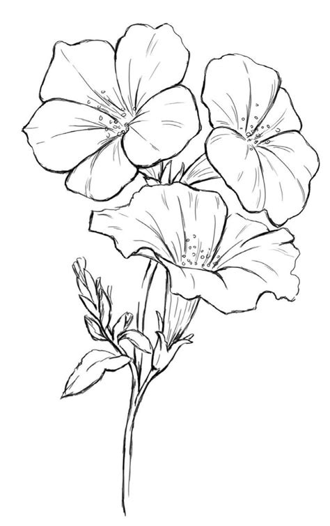 pin  alison mcmillan  coloring pages drawings