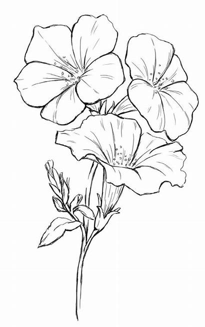 Drawings Flower Flowers Drawing
