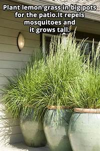 25+ best ideas about Grass on Pinterest
