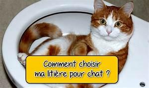 Litiere Chat Sans Odeur : quelle liti re pour chat choisir liti re agglom rante ~ Melissatoandfro.com Idées de Décoration