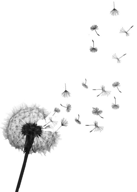 I would like one of these in a watercolor style--Dandelion Tattoo Meaning | Dandelion tattoos