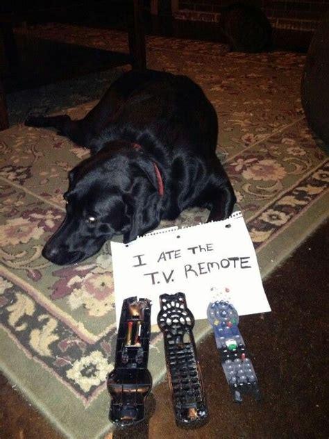 remote     trudy dog