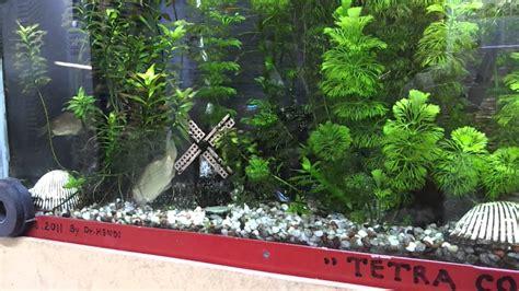 indahnya aquarium air tawar dindingaquarium
