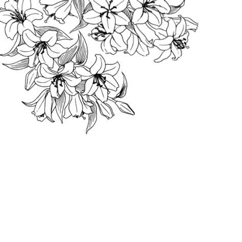 hanging file frame black and white clipart transparent