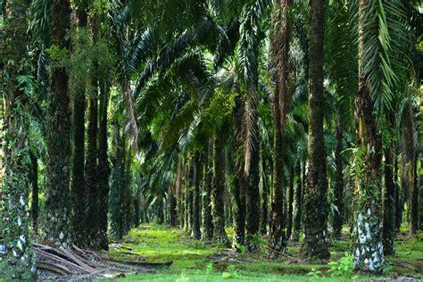 recettes de cuisine gratuite madeintogo palmier