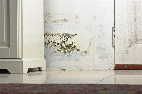 Moho en las paredes: qué es y cómo quitarlo   Murprotec