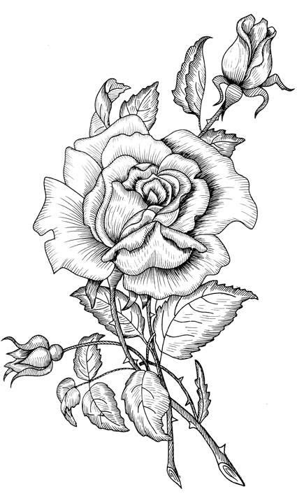 Pin by Gloria Juarez on bordados | Coloring pages, Coloring books, Drawings