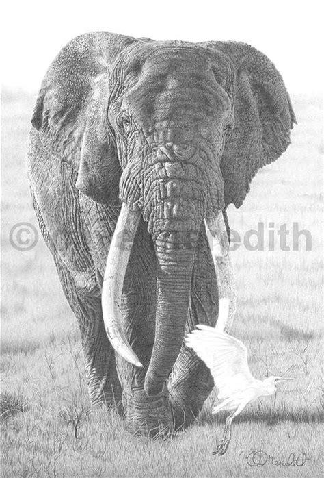 clive meredith wildlife art dswf wildlife artist