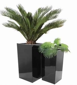 Palmen Für Draußen : pflanzk bel drau en welche pflanzen eignen sich ~ Michelbontemps.com Haus und Dekorationen