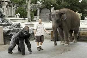Zookeeper Movie Gorilla | www.imgkid.com - The Image Kid ...