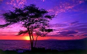 Beach Purple Sunset Wallpaper HD #2355 Wallpaper ...