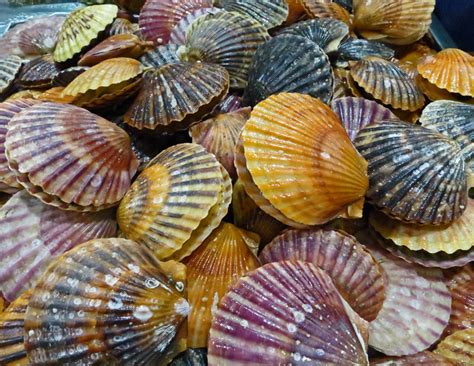 What's The Difference Between Oysters, Clams, Mussels, And