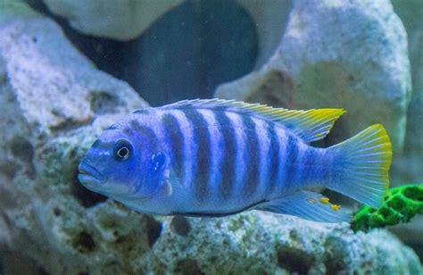 poisson aquarium eau douce colore 28 images aquarium eau douce poisson de fond poissons eau