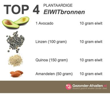 Voeding zonder eiwitten