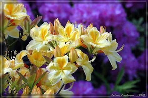 Gruenpflanzen Zimmerhortensien Vertreiben Den Winter Blues by Vertreiben Sie Den Winterblues Mit Farbenfrohen Zimmerpflanzen