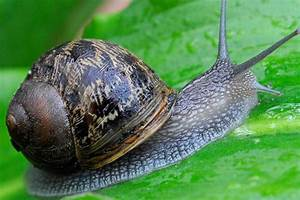 Problem Solving  Snails