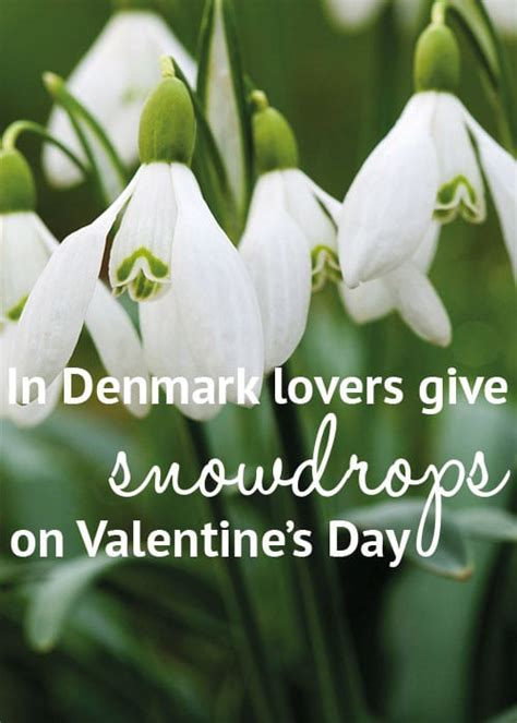 fascinating facts  flowers  valentines day
