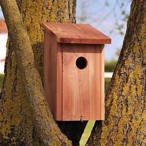 Oiseaux Decoration Exterieur : redirecting to fr oiseaux exterieur oiseaux des jardins sc627 ~ Melissatoandfro.com Idées de Décoration