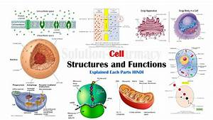 Cell Biology   Various Parts And Function Of Cell  Hindi